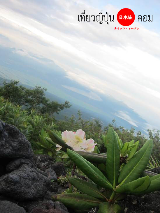 flower_at_fujisan