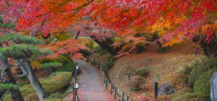 fukushima_autumn_main