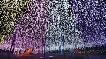 ashikaga illumination 03