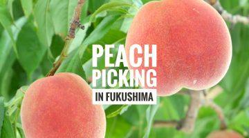 peach_main